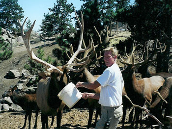 Save the Elk and Deer Foundation from CWD